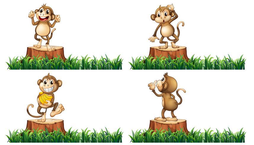 Glückliche Affen auf den Baumstümpfen