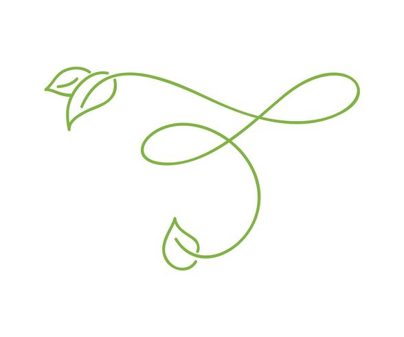 Green monoline calligraphy logo of green leaf ecology vector element. Divider or corner design for wedding and Valentines Day, birthday greeting card and web, eco icon