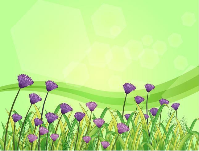 Flores violetas en el jardin