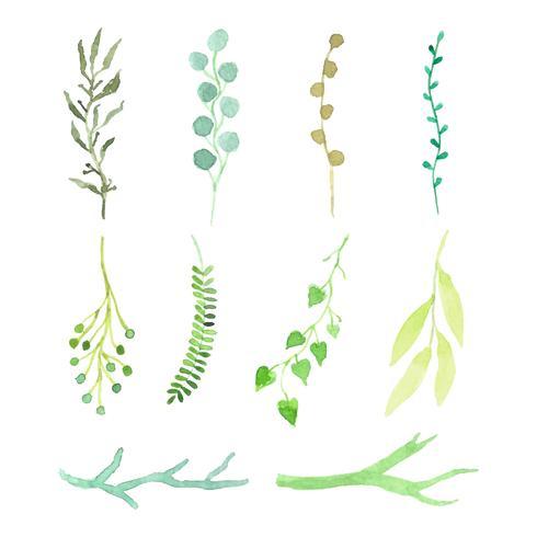 aquarelle ensemble de feuilles et de branches