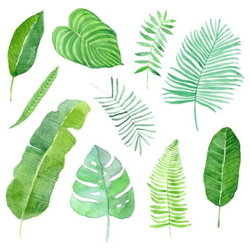 set di foglie tropicali dell'acquerello
