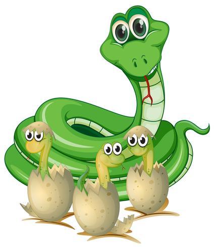 Serpientes y serpientes bebé con conchas.