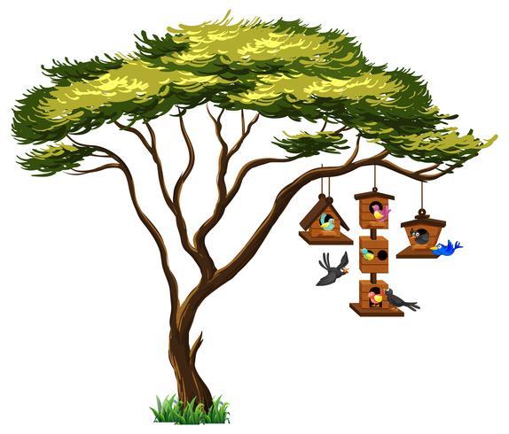 Molti uccelli sul birdhouse che pendono dall'albero