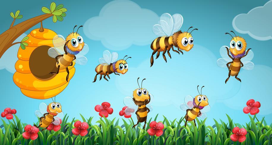 Bijen vliegen uit de bijenkorf in de tuin
