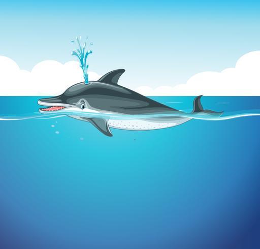 Delphinspritzwasser im Meer