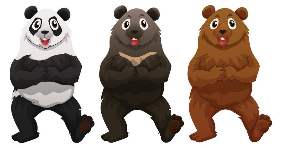 Three types of bears