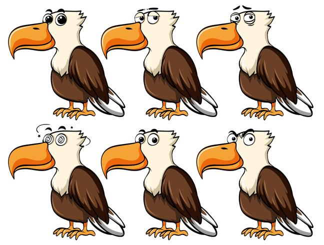 Águila con diferentes expresiones faciales.