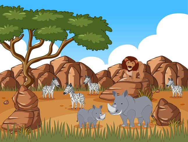 Animais selvagens no campo de savana