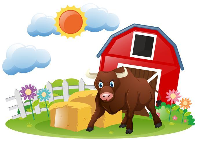 Stier die zich op het boerenerf bevindt