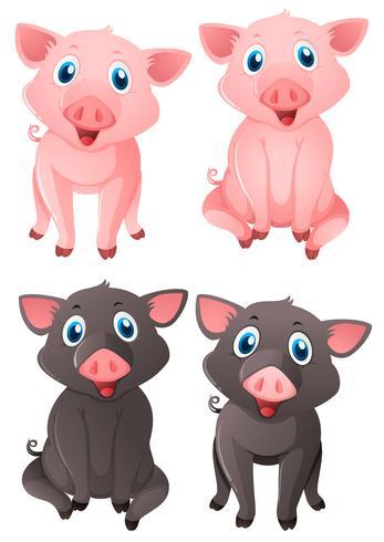 Porcs roses et noirs vecteur
