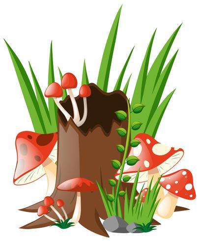 Red mushrooms growing in garden