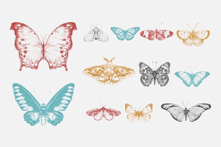 Illustrationszeichnungsart der Schmetterlingssammlung