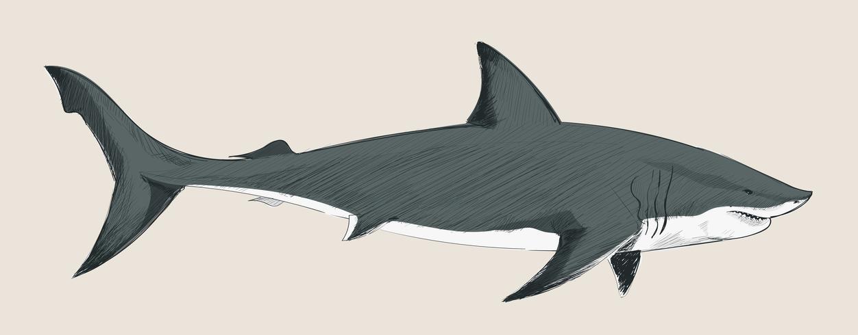 De stijl van de illustratietekening van haai