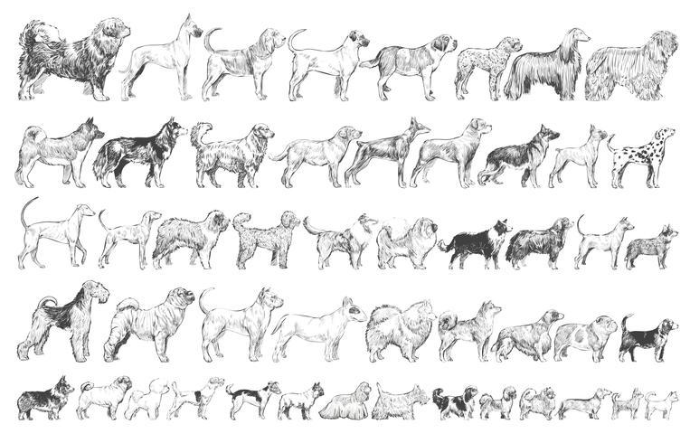 Illustration ritstil av hundraser samling