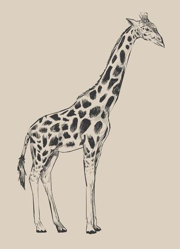 Estilo de desenho de ilustração de girafa