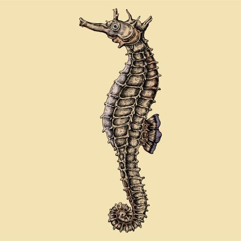 Ippocampo disegnato a mano isolato