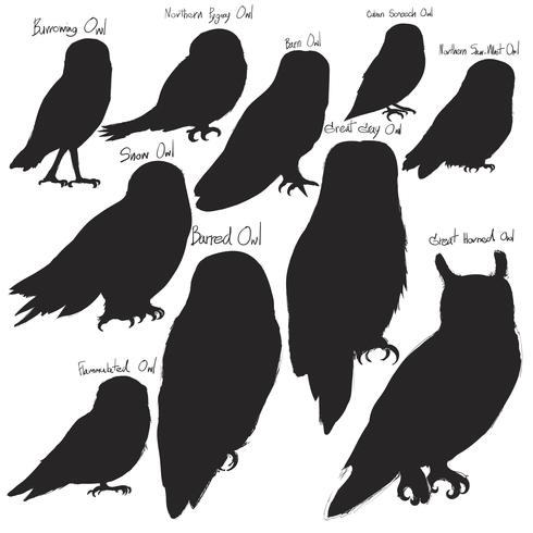 Animals Illustration Vector Art Set