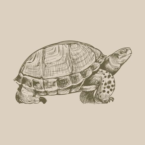 Illustritritning stil av sköldpadda
