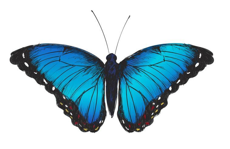 Dibujo estilo ilustración de mariposa