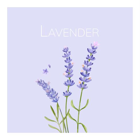 Hand drawn lavender flower illustration