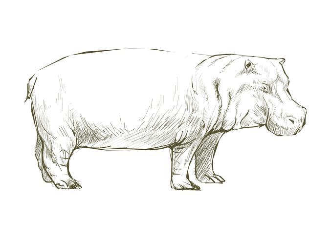 Illustrazione degli animali di ippopotamo