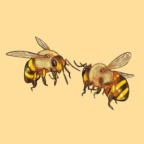 Illustration of two cute bees