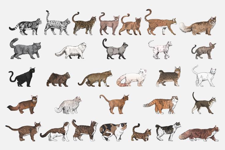 Lo stile del disegno dell'illustrazione di gatto alleva la raccolta