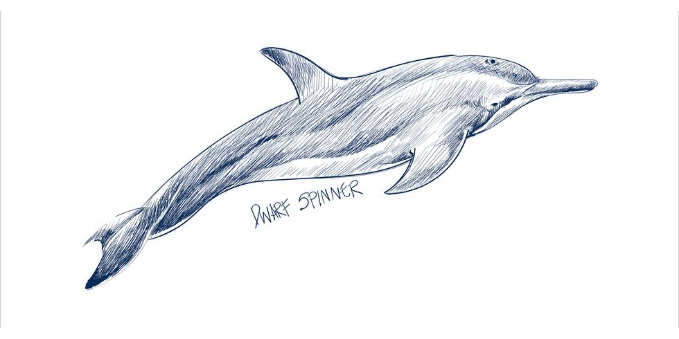 De stijl van de illustratietekening van dwerg spinner dolfijn