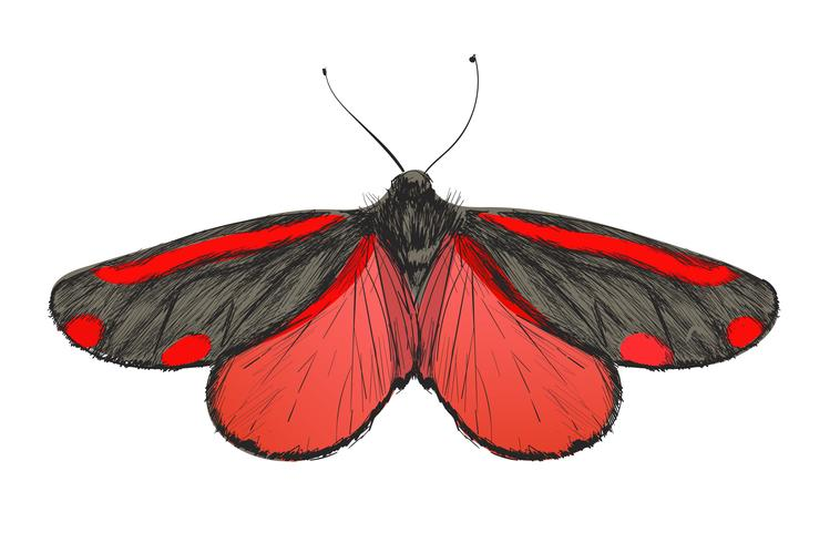Stile di disegno illustrazione della farfalla