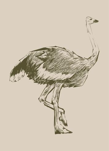 Estilo de desenho de ilustração de avestruz