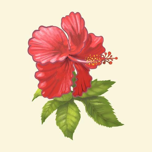 Dibujado a mano de rosa china