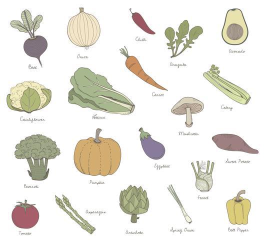Vecteur de différentes sortes de légumes