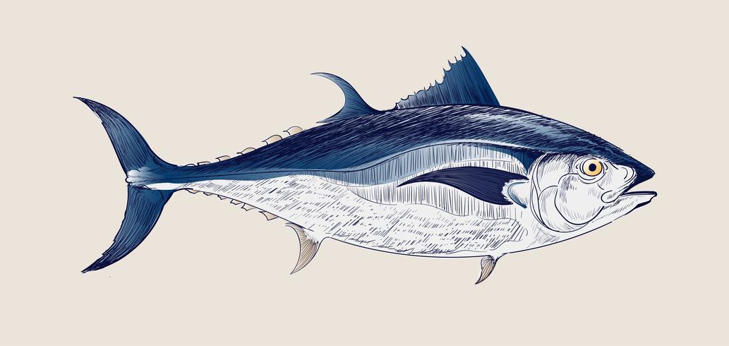 Desenho vintage de atum