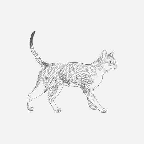 Illustrationszeichnungsart der Katze