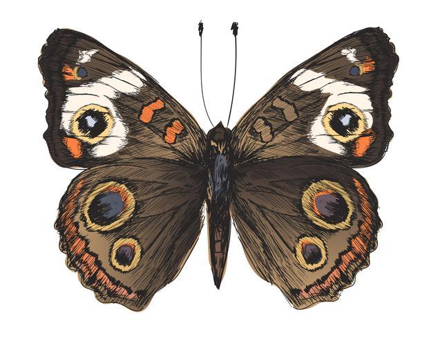 Sola mariposa detallada