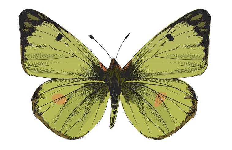 Style de dessin d'illustration de papillon