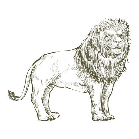 Ilustração desenho estilo de leão