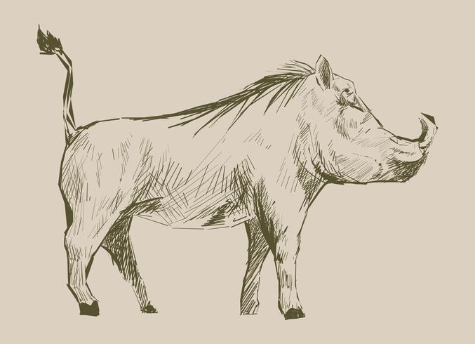 Estilo de desenho de ilustração de porco