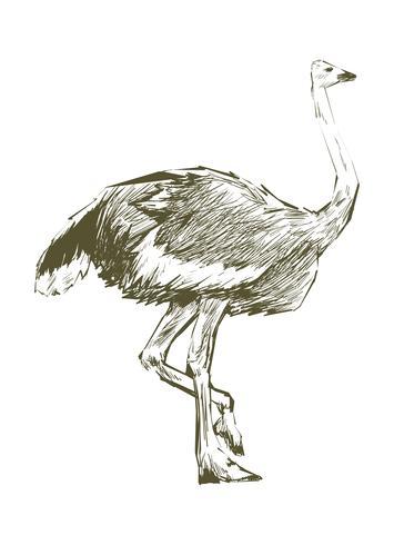 Dibujo estilo ilustración de avestruz