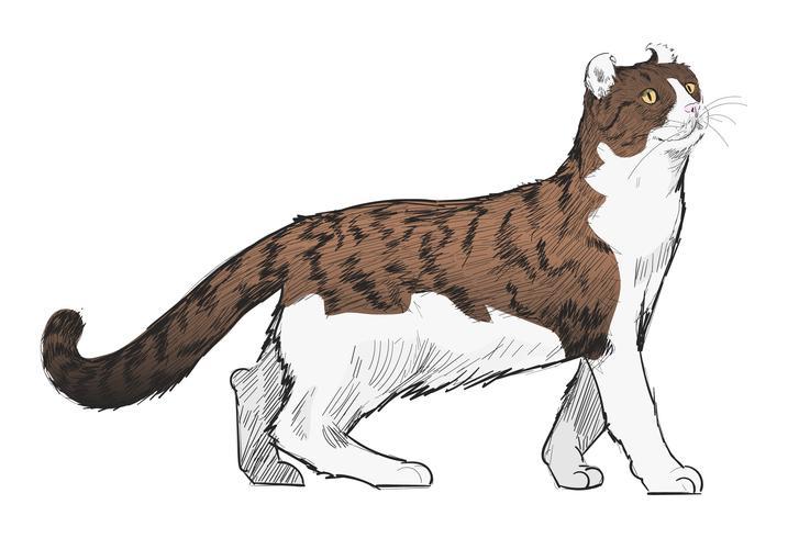 Stile di disegno dell'illustrazione del gatto