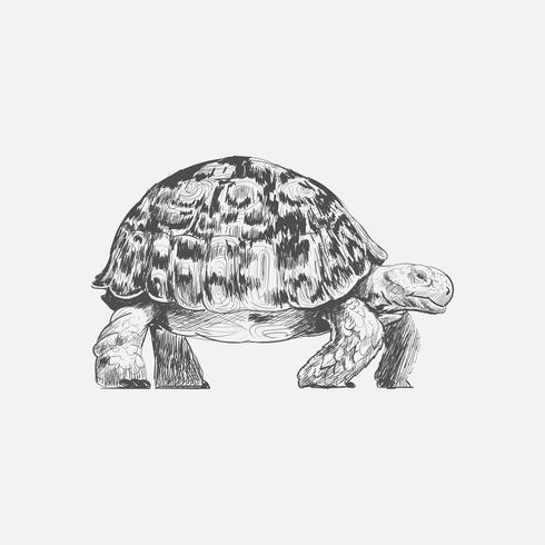 Illustrazione stile di disegno di tartaruga