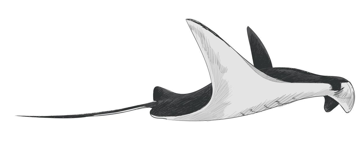 Style de dessin illustration de poisson de mer