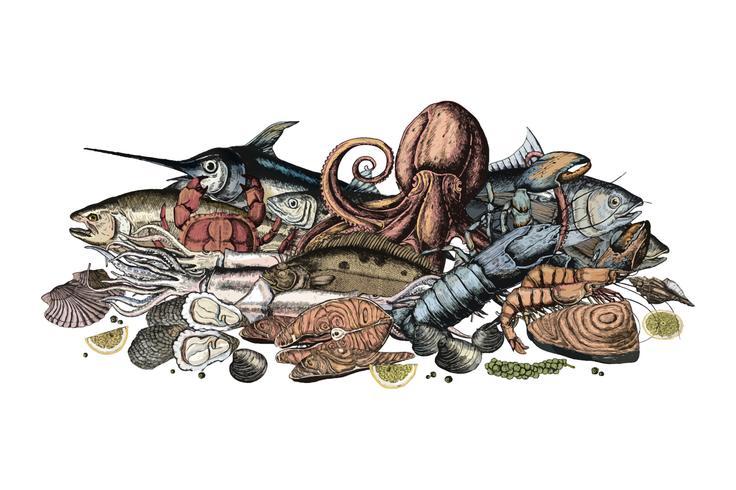 Dibujado a mano del concepto de mariscos