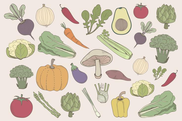 Set di illustrazione colorata di verdure
