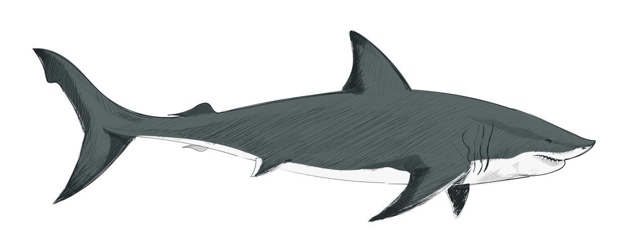 Estilo de desenho de ilustração de tubarão