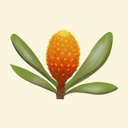 Hand getrokken ananas geïsoleerd op gele achtergrond