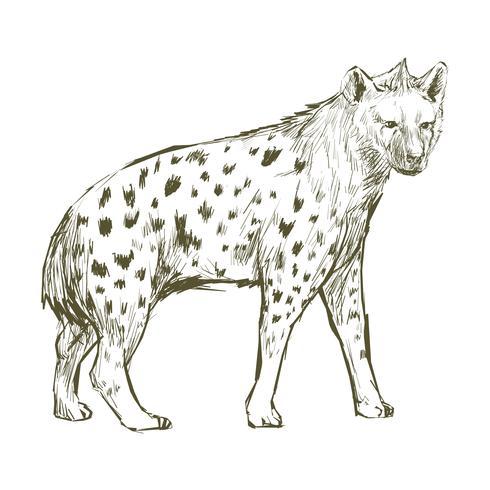 Estilo de desenho de ilustração de hiena