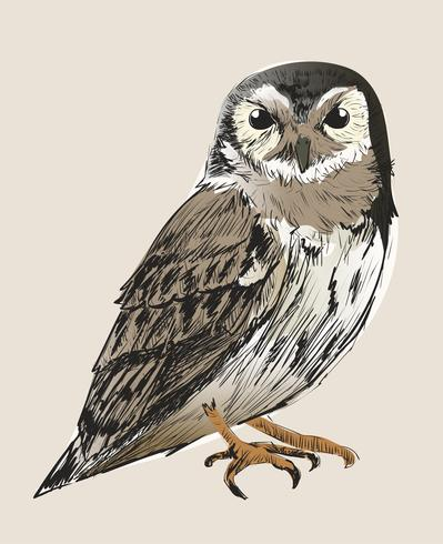 Illustration drawing style of owl