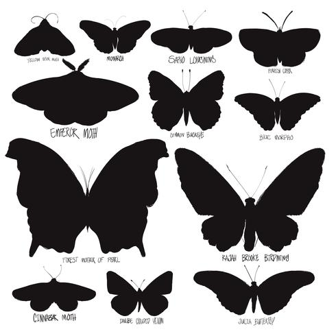 Estilo de dibujo de ilustración de colección mariposa