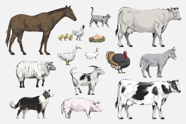 Style de dessin d'illustration de la collection d'animaux